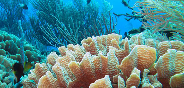 Bushehr Marine Ecosystem Studied for Heat Impact